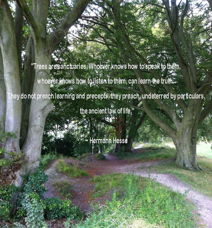 Trees by Herman Hesse