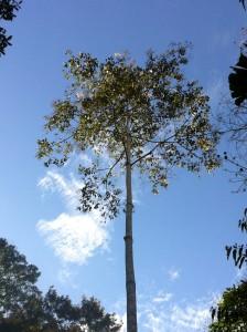 Kapitari Tree Overlooking My Tambo